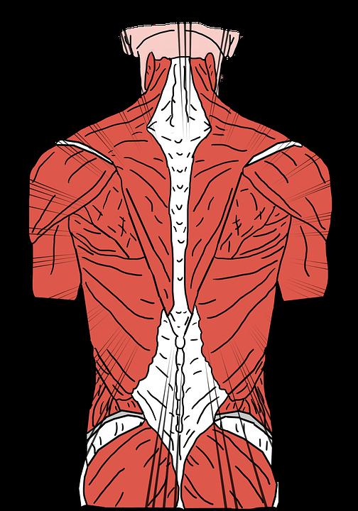 back-pain-3769360_960_720